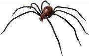 Araignée Géante Yeux rouges